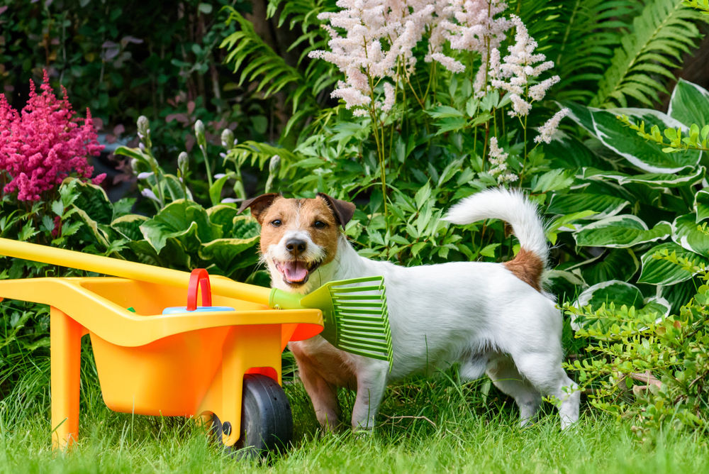 Garden and Pets